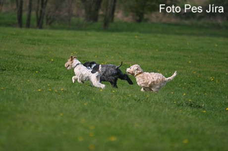 Coursing4